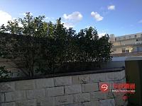 Strathfield       楼顶风景大阳台25平米次卧7分钟火车