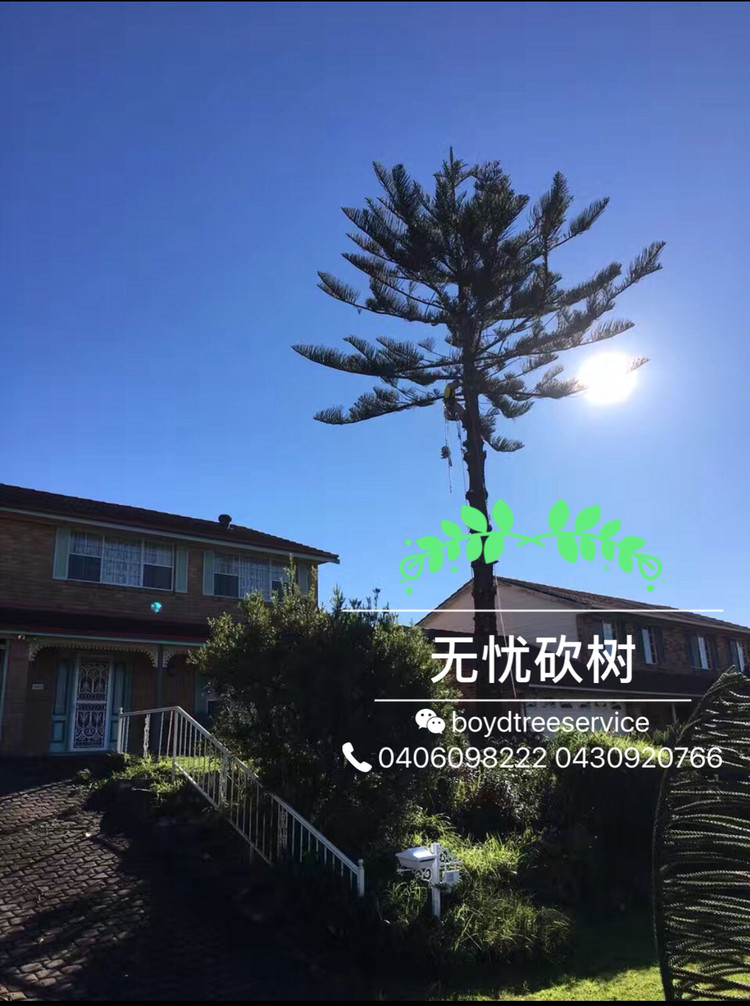 砍树找无忧 无忧砍树 悉尼专业树木服务公司