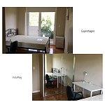 Meadowbank 整洁3房现代公寓单间招单人