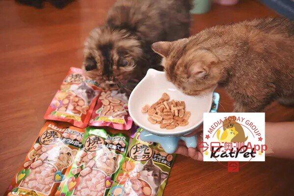 rhodes日式宠物店寄养美容售卖看诊一条龙