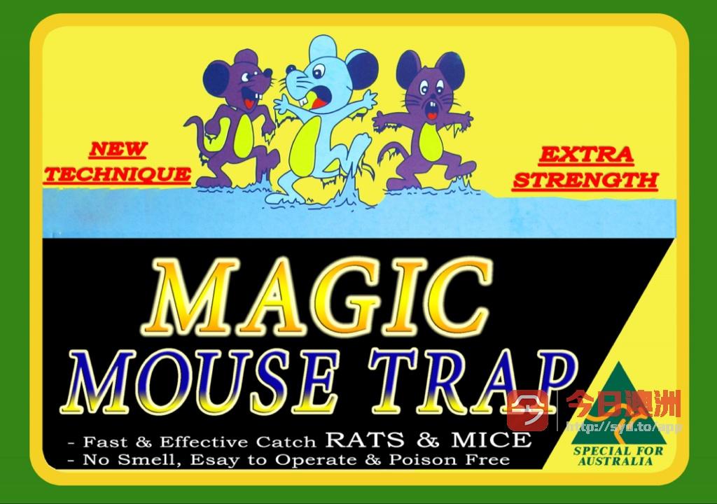 神奇老鼠胶