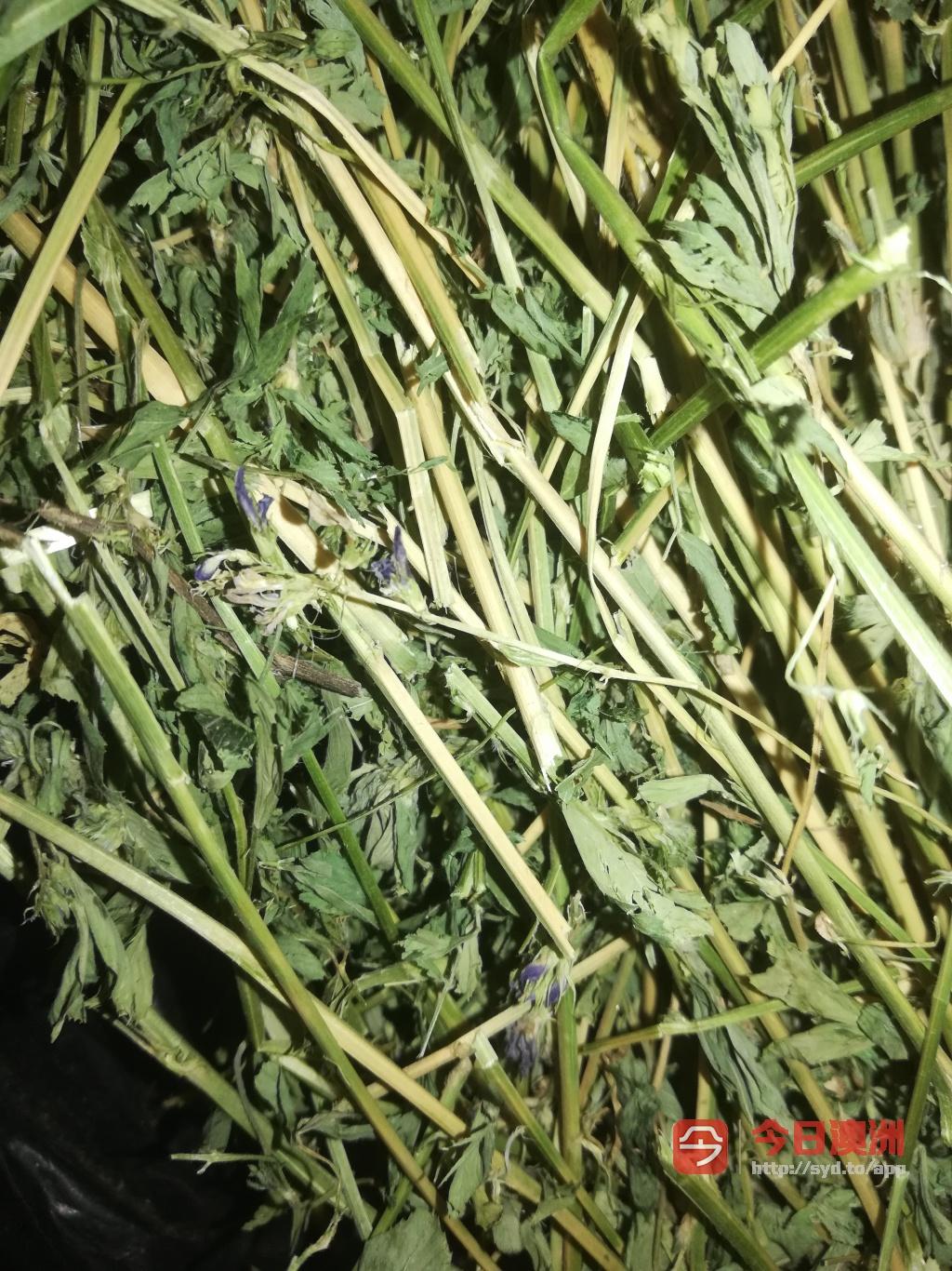 质量好的燕麦草苜蓿草和兔粮Bunny SYD