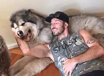 """【宠物】澳洲小哥火了!他自称是""""全世界最爱狗""""的人,15年来救出1000只被虐待的狗!"""
