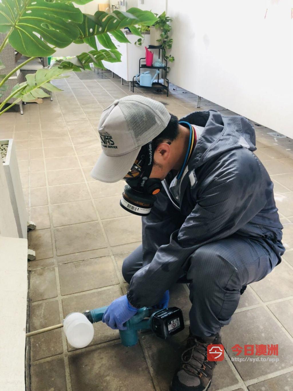 专业持牌除虫  Nice Home Service Pest Control