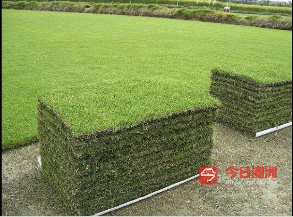 花园割草砍树清理垃圾研磨树根铺设草坪及各种绿化项目