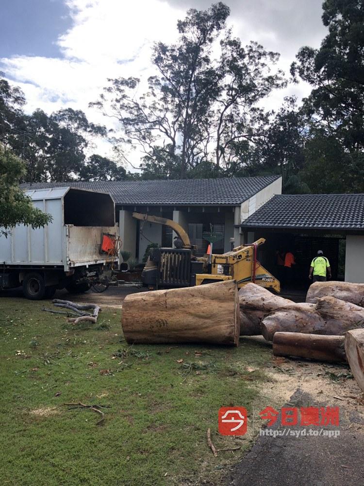 悉尼专业砍树磨根