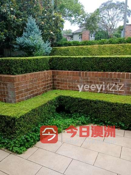 旧房翻新花园设计施工花园整理修剪高压清洗铺草坪砍树