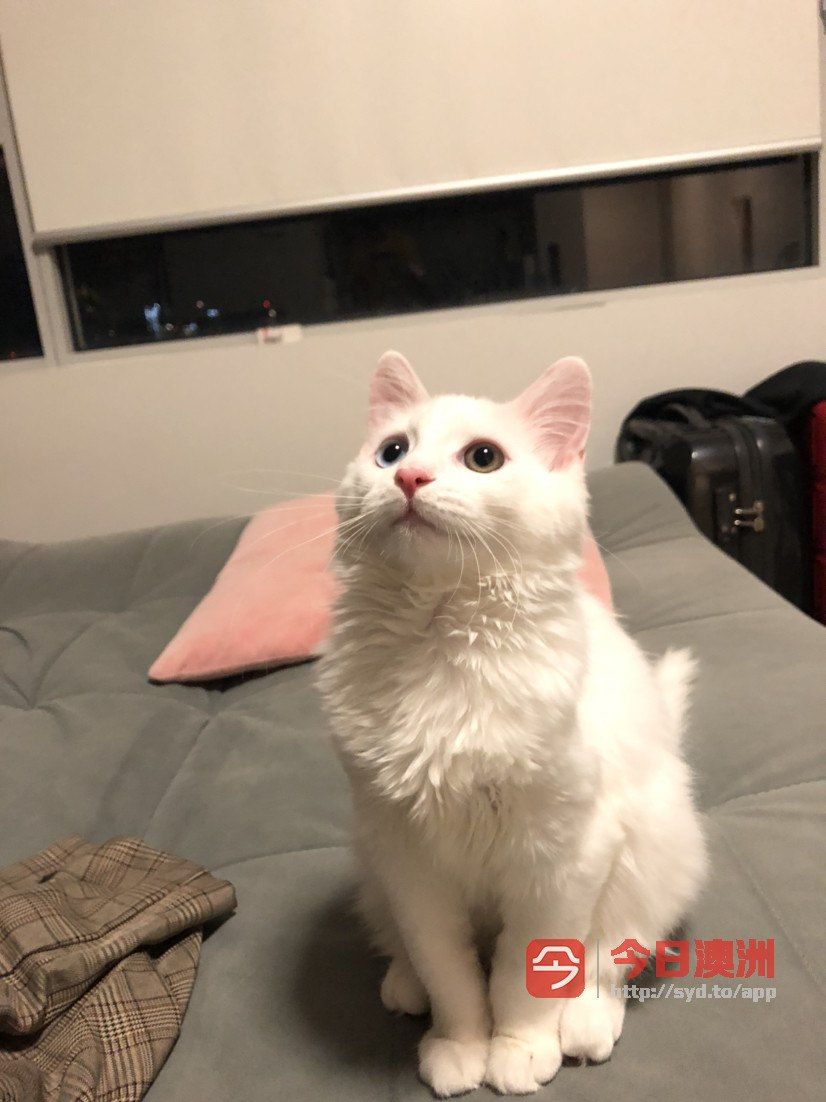 Zetland猫猫寄养6刀一天
