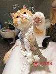 专业猫洗护 美容 寄养