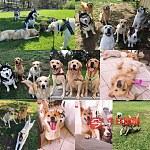 悉尼中大型犬寄养宠物蛋糕零食宠物美容