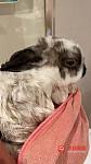 可爱小兔子求领养