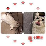 猫猫zetland寄养7刀一天