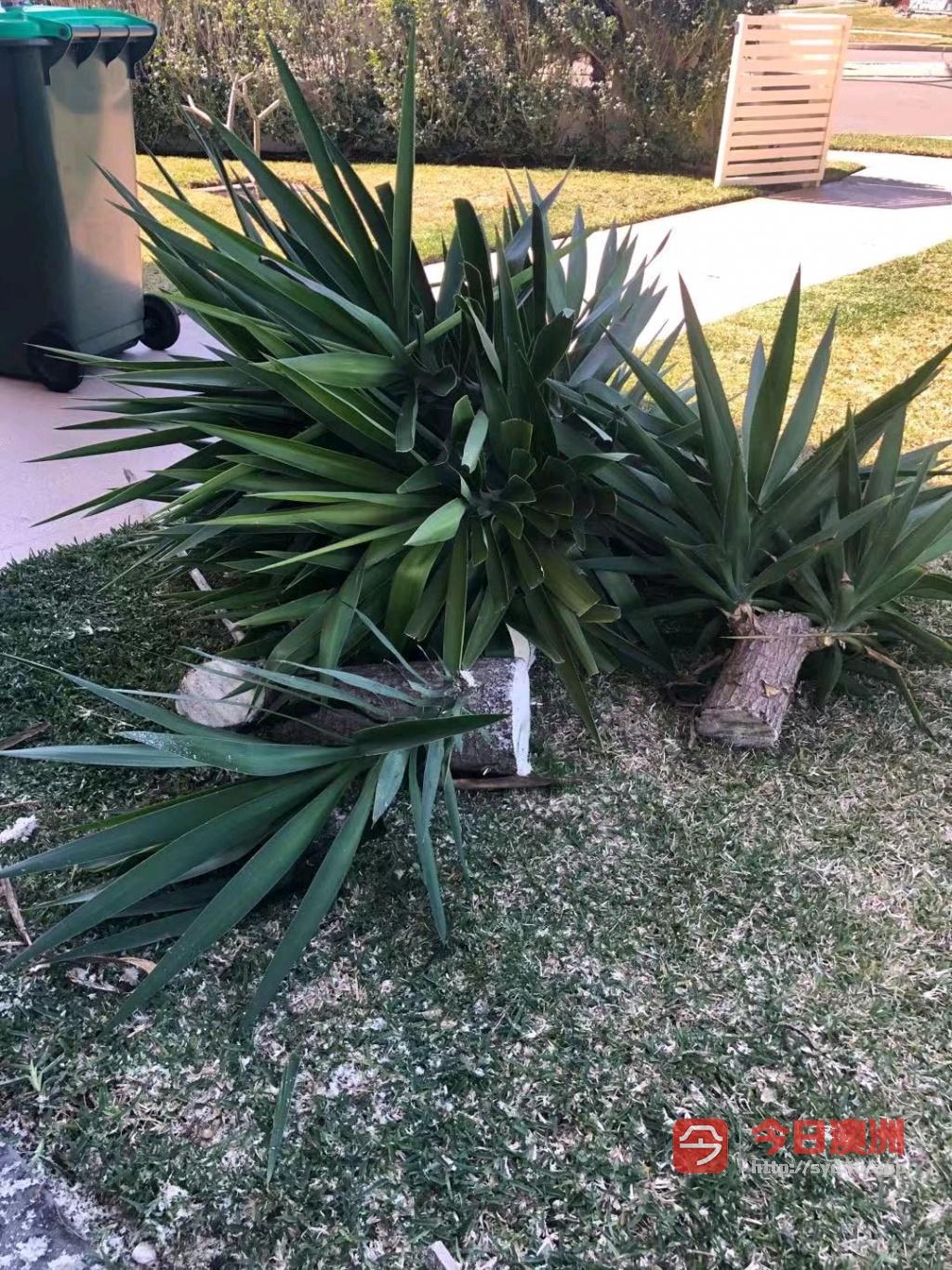 花园专业割草打边围栏凉棚制作