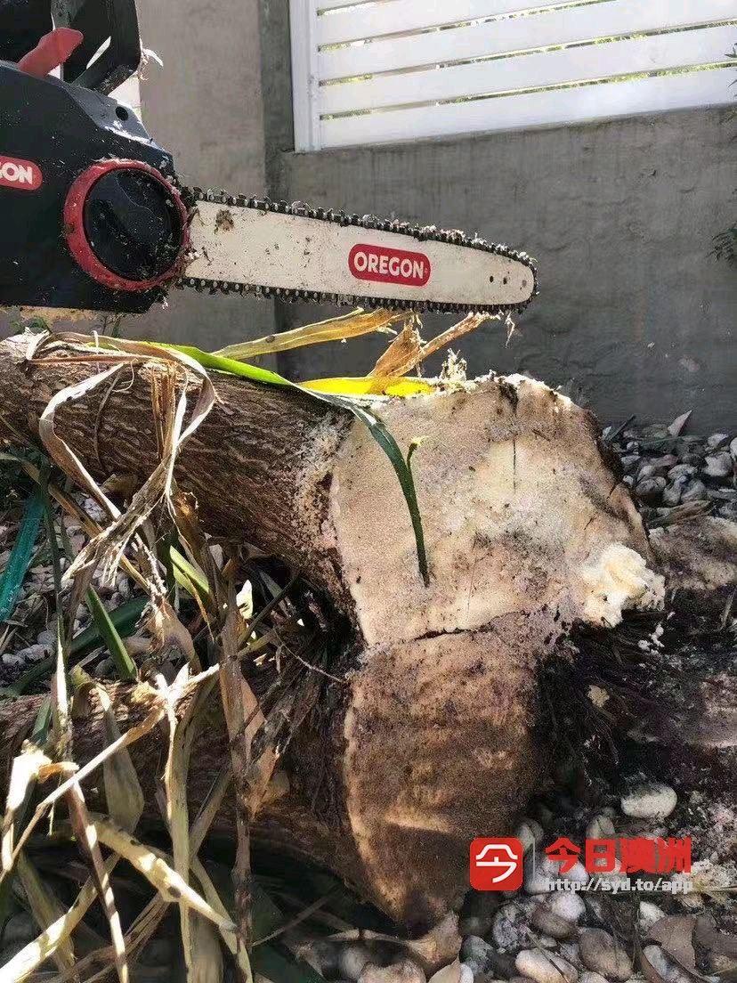 正规公司专业砍树花园专业割草打边