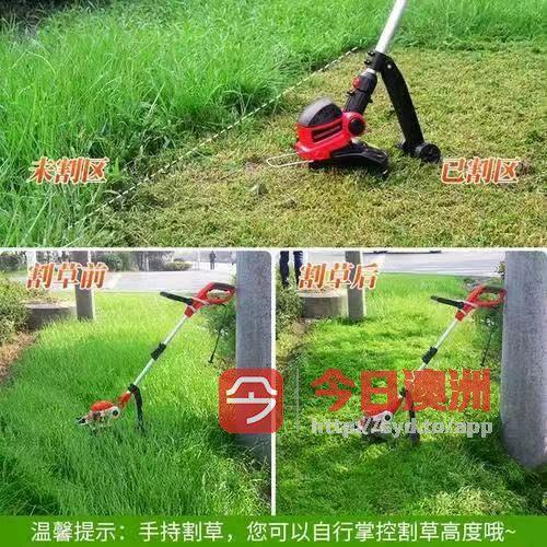 花园修剪砍伐树木与植物修剪草坪树墙草坪护理清除花园垃圾铺草坪草坪地砖互改等服务
