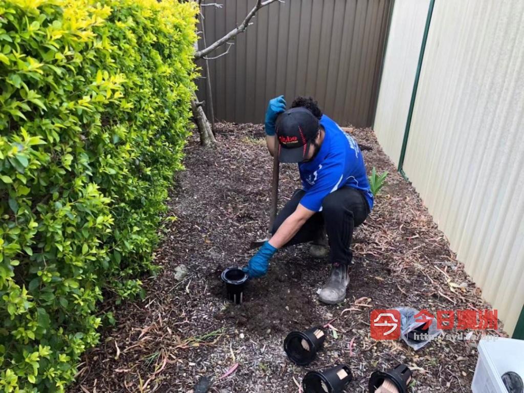 专业住宅白蚁检查白蚁防治商业白蚁检测房屋预建白蚁报告