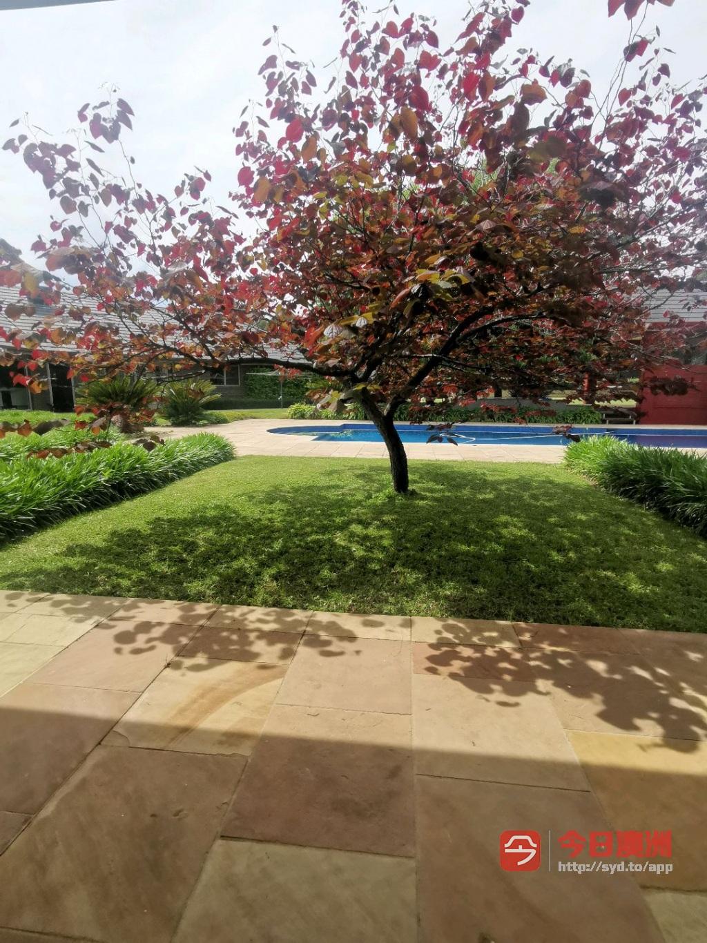 花园清理剪草坪修剪树枝地面清洗屋顶瓦片清洗花园一条龙服务