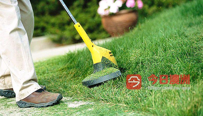 悉尼专业花园修剪 割草打边修剪树木花草处理杂草清理垃圾花园打理