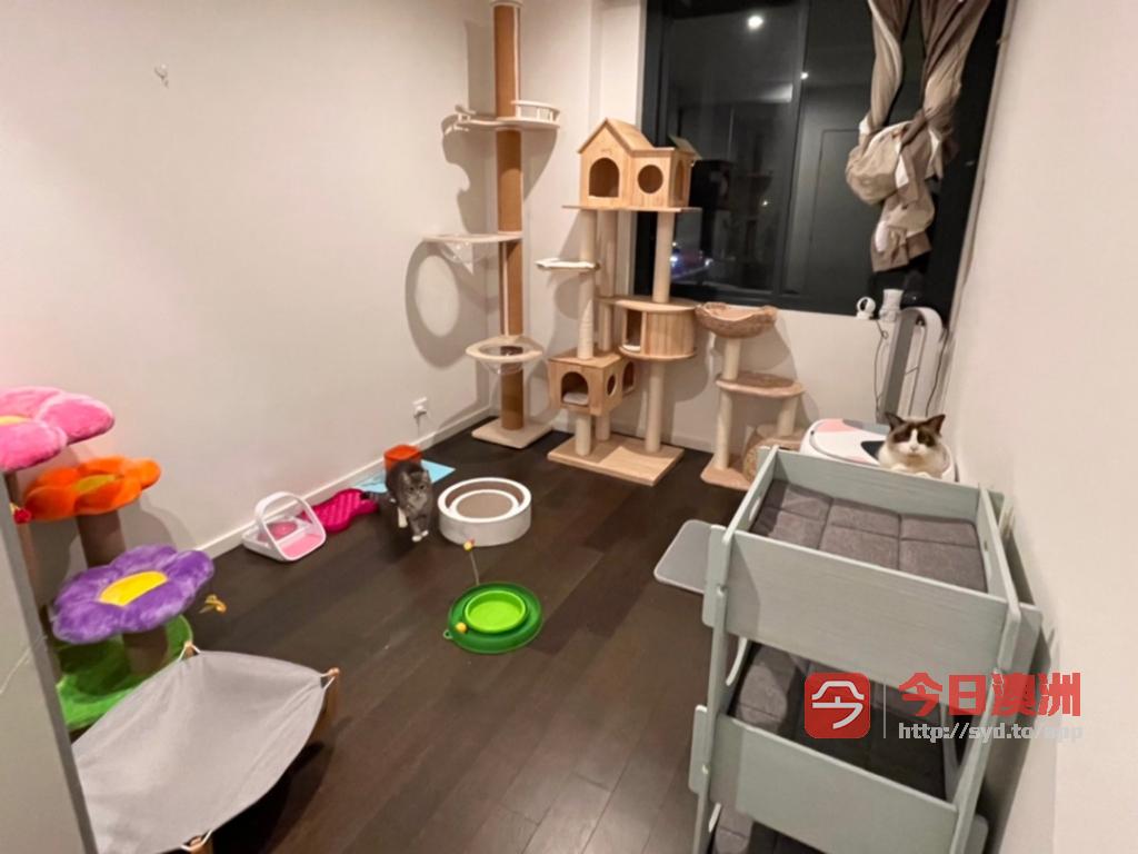 猫咪寄养 家长可以24h实时监控 免费接送 五星级洽洽喵酒店