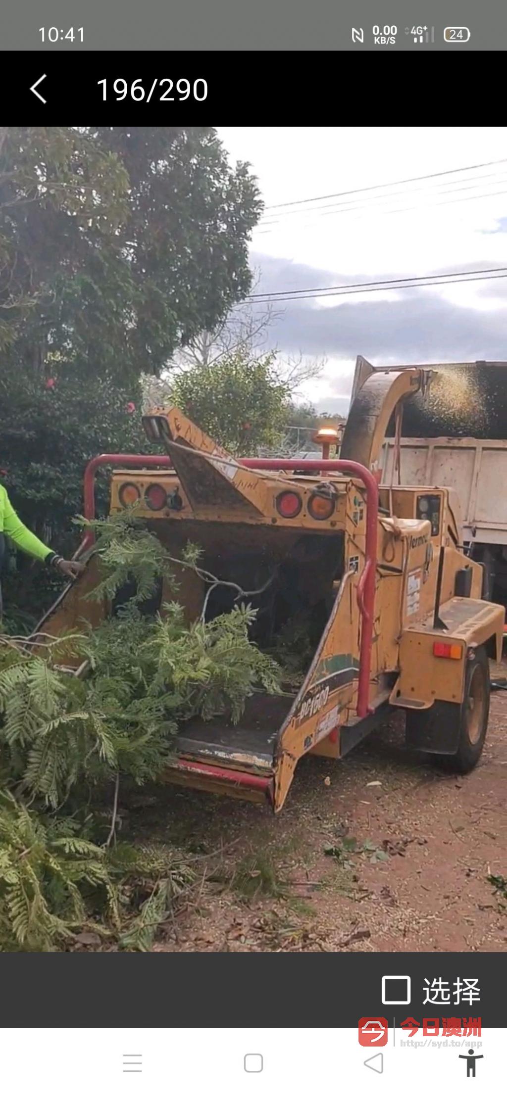 砍树挖根剪枝