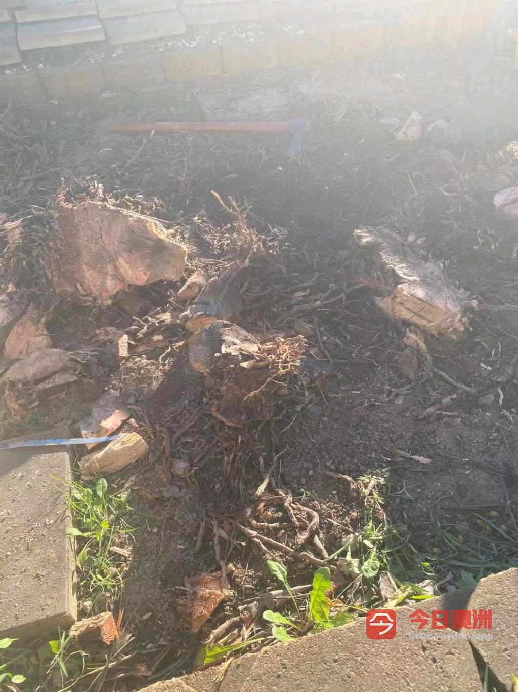 专业砍树刨树根