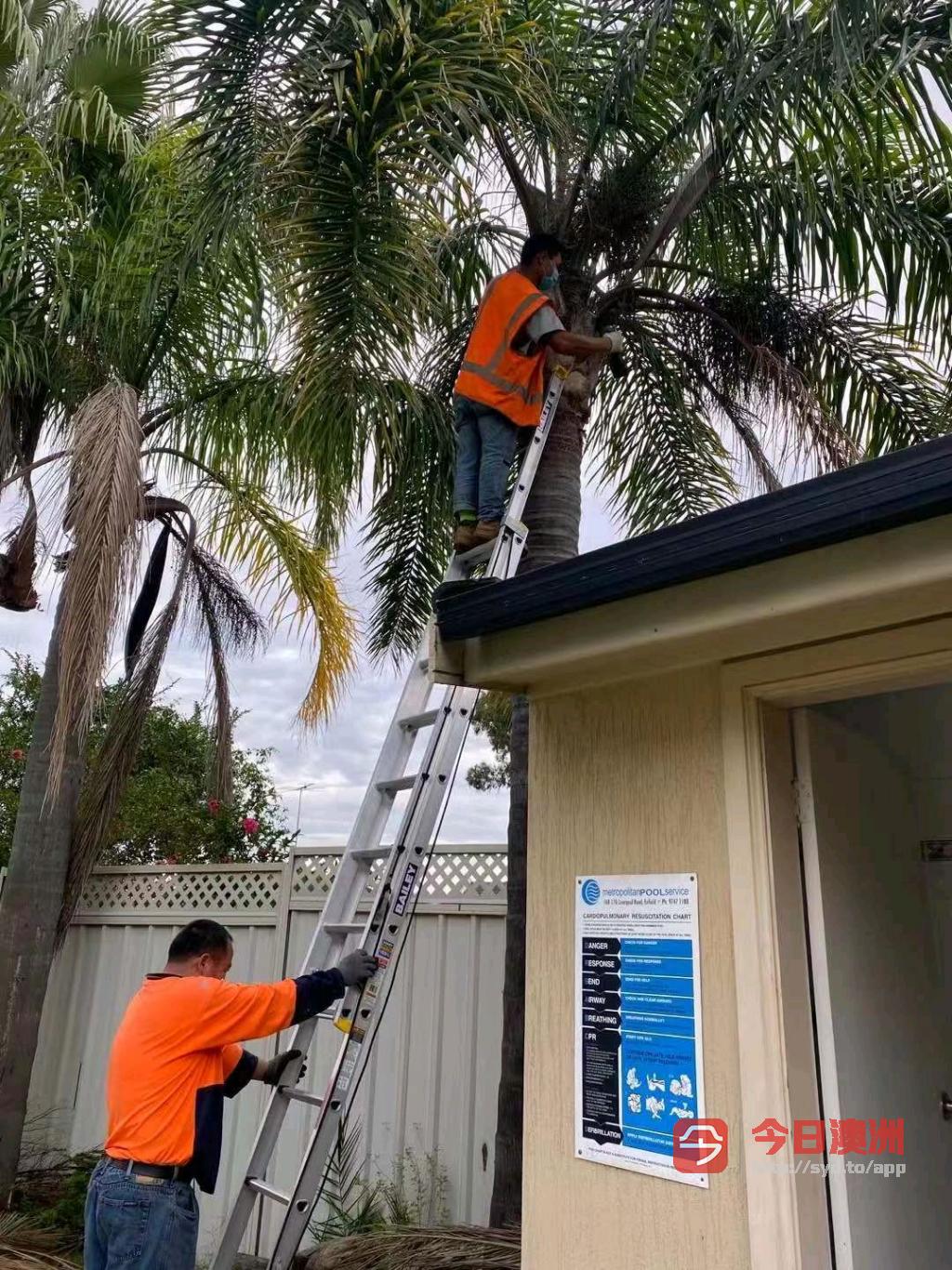 高压清洗油漆花园整理砍树