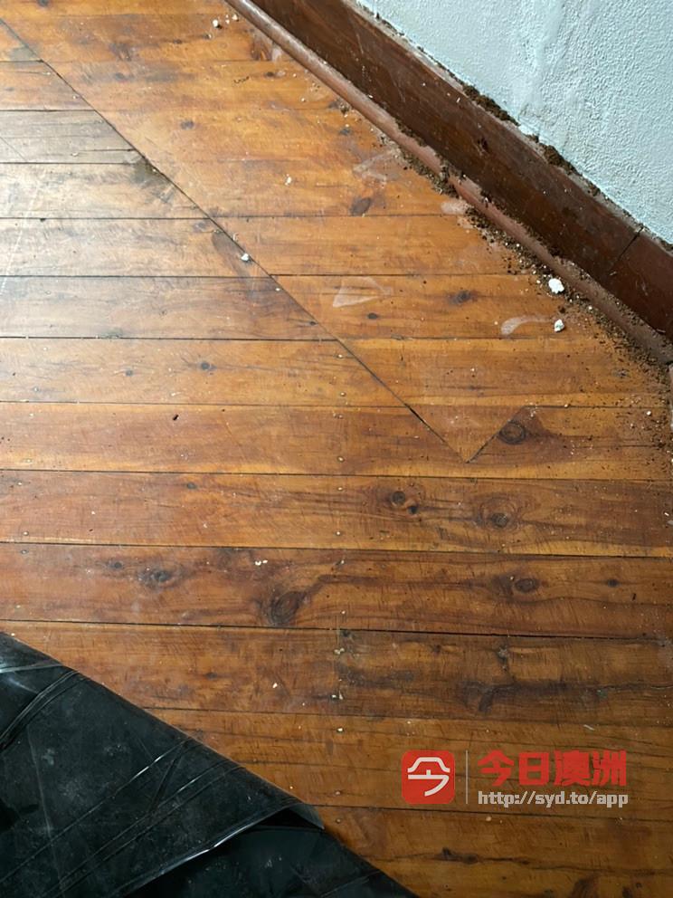 求租地板打磨机 或打磨地板
